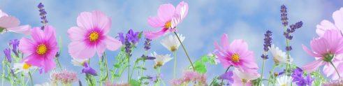 cropped-wild-flowers-flowers-plant-macro-40797.jpeg
