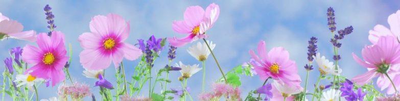 cropped-wild-flowers-flowers-plant-macro-407971.jpeg